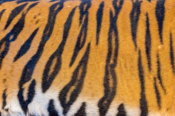 Tiger Fur, Tiger Leather