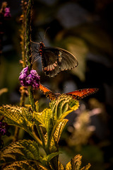 butterflies on a stalk with purple flowers and green leaves
