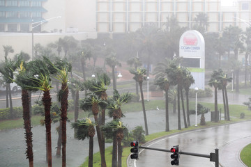 Rain batters palm trees in front of the Ocean Center as the eye of Hurricane Matthew passes Daytona Beach