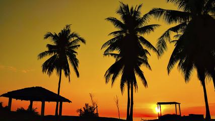 silhouette of trees on sunrise