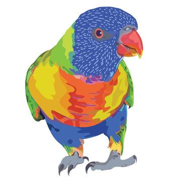 Rainbow Lorikeet Realistic Vector Illustration