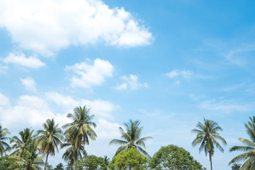 Coconut Trees with blue sky on summer in thailand.