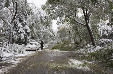 A man sweeps his car off to move it from falling tree limbs during a summer snow storm in Calgary.