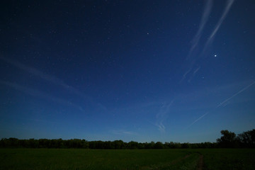 Forest and field in the background of the night sky with stars