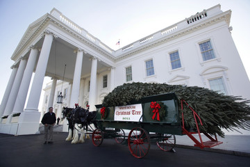 The White House Christmas Tree is delivered by horse drawn carriage
