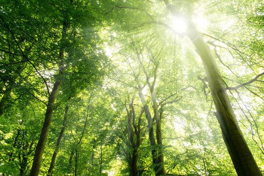 Sun rays shining through trees. Nature background.