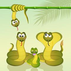 family of snakes