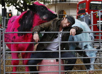 Artist Mark Evans poses for a photograph with two cows called George and Barry, one dyed pink and the other dyed blue, as they stand in a pen for the opening of an exhibition called Furious Affection by Evans, in central London