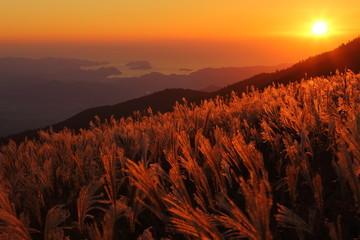 生石高原 夕日に染まるススキの群生