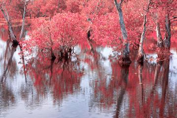 Melaleuca trees Wetland