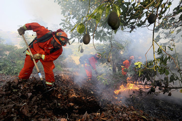 A prison crew battles a fire in an avocado grove outside Fallbrook, California