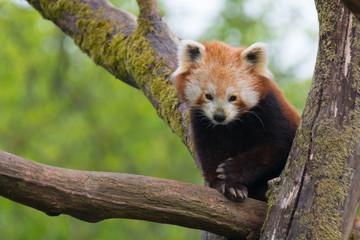Search Photos Panda