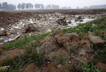 Pieces of turf and rubble are seen at an illegal golf course which was demolished and turned into a cornfield in the suburbs of Beijing