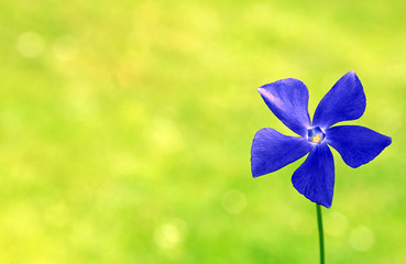 yellow and green background with blue flower