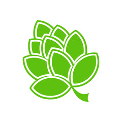 Vector Illustration of green hop flower.