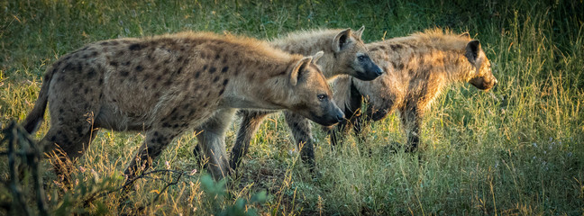 Poster Hyena Gang on the move