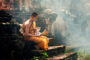 Young Buddhist novice monk reading and study outside with a cat