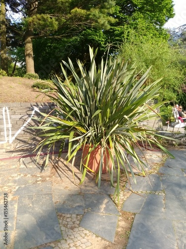 mediterrane pflanzen stockfotos und lizenzfreie bilder auf bild 155462738. Black Bedroom Furniture Sets. Home Design Ideas