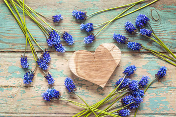 Wooden heart with blue muscari flowers on old wooden background. Place for text. Top view.
