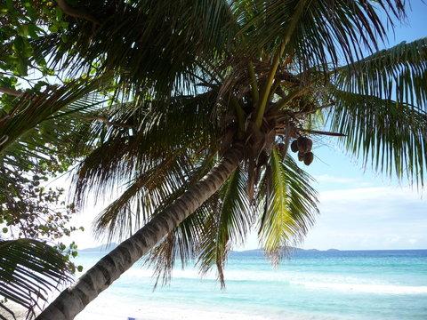 Tortola - British Virgin Islands