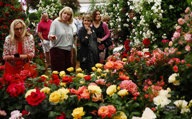 Visitors view a rose display at the RHS Chelsea Flower Show in London
