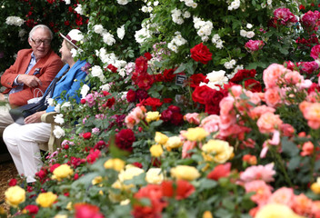 Visitors sit amongst roses at the RHS Chelsea Flower Show in London