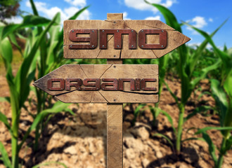 GMO and Organic Sign on a Corn Field