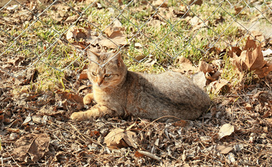 Cute cat on sunny day, outdoor