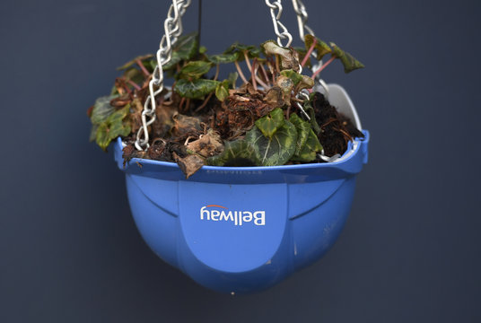 A hard hat is used as a hanging plant pot at a Bellway housing construction site in London