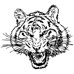 Hand drawing of a roaring tiger