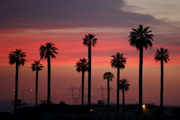 Power lines and palm trees are seen at sunset near Lost Hills