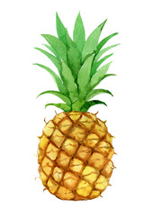 Pineapple, isolated on white background, watercolor illustration