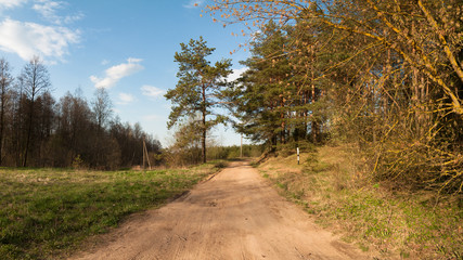 Rural dirt road along the forest