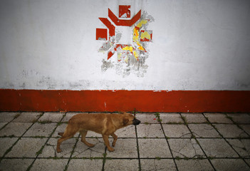 A dog walks past the Olympic snowflake logo on the wall of the Kosevo stadium, the venue of the opening ceremony for the 1984 Winter Olympics in Sarajevo