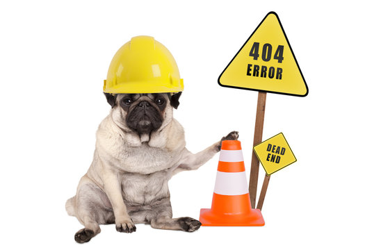 pug dog with yellow constructor safety helmet and cone and 404 error and dead end sign on wooden pole, isolated on white background