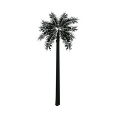 palm tree nature decoration botanical vector illustration
