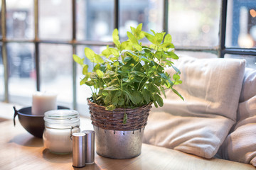 Table with fresh mint in restaurant.
