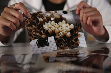 Former nuclear clean-up worker Ryo Goshima, 23, shows off a photograph showing bee larvae inside a honeycomb, during an interview with Reuters in Tokyo