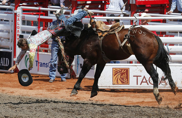 Wilcox of Medicine Hat, Alberta goes flying off the horse War Rocket in the novice saddle bronc event during the 101st Calgary Stampede rodeo in Calgary