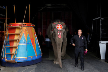 "Elephant Department Head Terry Frisco walks an elephant  from a performance at Ringling Bros and Barnum & Bailey Circus' ""Circus Extreme"" show at the Mohegan Sun Arena at Casey Plaza in Wilkes-Barre, Pennsylvania, U.S."