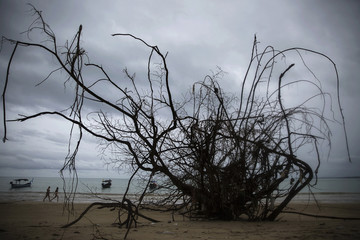 Foreign tourist walk on a small beach with fallen big trees and damage still visible from 2004 tsunami in Khao Lak