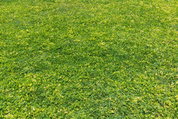 Green tree grass texture