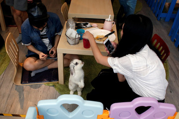A rabbit looks at a customer at the first rabbit cafe in Hong Kong