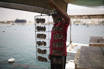 A worker displays oysters before immersing them in the water, after clearing them at RAK's oyster farm off the coast of Ras Al Khaimah, one of the seven emirates that make up the United Arab Emirates