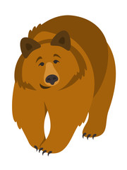 Cute smiling grizzly bear vector cartoon illustration. Wild zoo animal icon. Big brown furry adult predator walking. Isolated on white. Forest fauna childish character. Simple flat design element