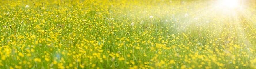 Frühlingswiese mit Blumen im Gegenlicht