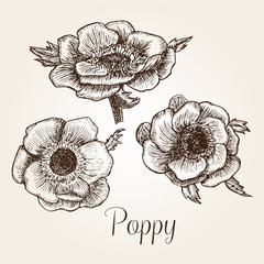 Hand drawn poppy