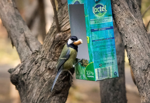A tomtit bird sits on a feeding rack made from an empty milk carton in a park in Almaty