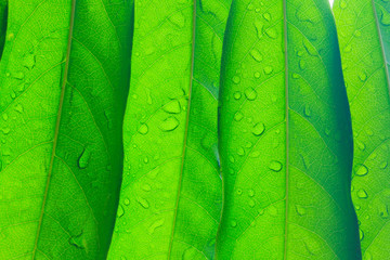 Beautiful green leaves Use for background