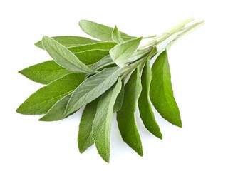 Sage leaves in closeup